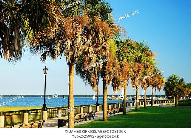 Palm trees in Charleston Waterfront Park