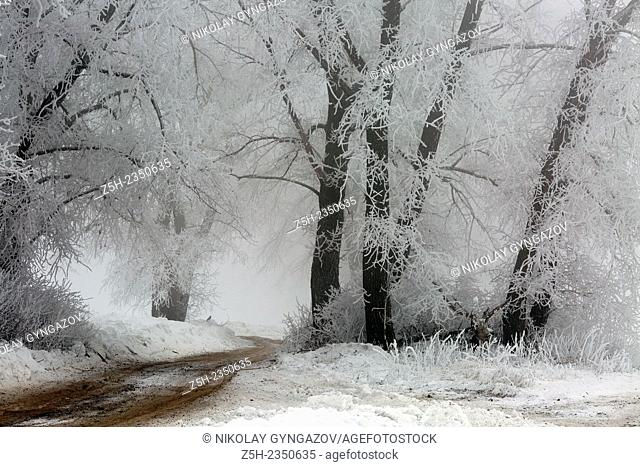 Kursk region. Winter in the deciduous forest