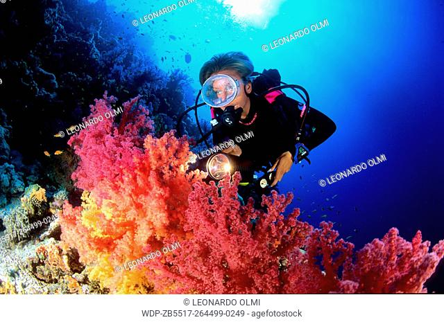 Egypt, Red Sea, Sharm el Sheikh, giant red and orange soft corals (Dendronephthya sp.)