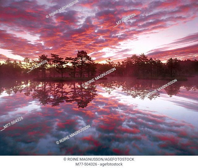 Lake, island, Pine trees (Pinus sylvestris), clouds, colours, calm lake. Knuthöjdsmossen. Västmanland. Sweden