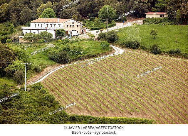 'Txakoli' vineyards, Getaria, Gipuzkoa, Basque Country, Spain