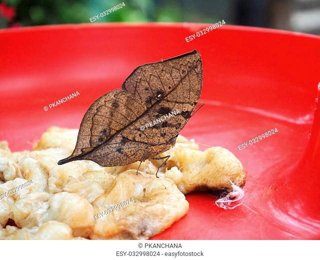 Close up brown butterfly feeding banana on red tray in the park