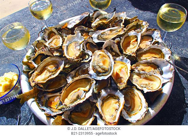 The famed oysters of the Bassin d'Arcachon, Gironde, Aquitaine, France