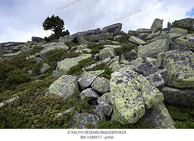Lichen-covered stones, Niederhorn, Bernese Oberland, Canton of Bern, Switzerland, Europe