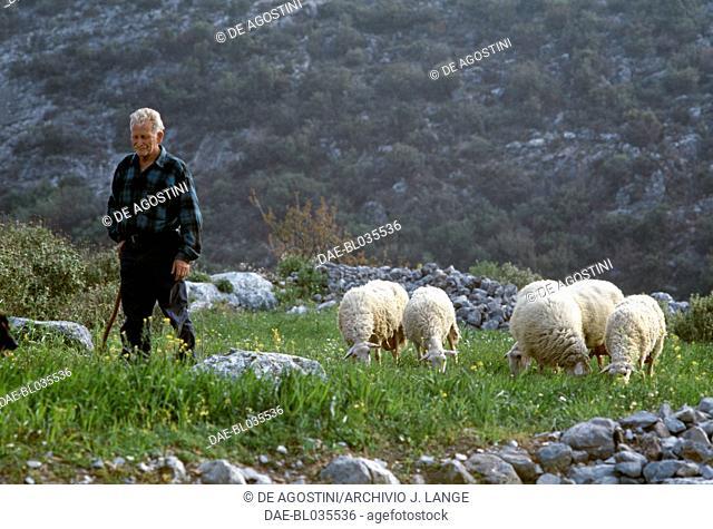 Shepherd with sheep, Axos, Crete, Greece