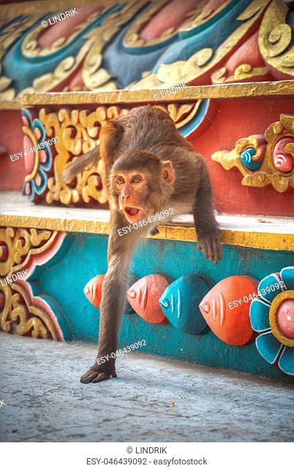 Monkeys in Pashupatinath Temple , Kathmandu, Nepal