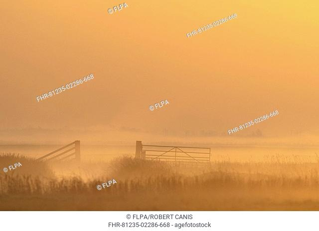 View of coastal grazing marsh with gate in mist at sunrise, Elmley Marshes N N R , Isle of Sheppey, Kent, England, spring