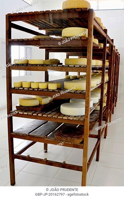 Cheeses on display in dairy in the rural area of the Serra do Canastra, São Roque de Minas, Minas Gerais, Brazil, 05.2016