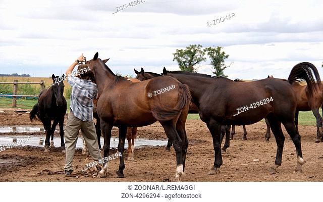 Dresasge Horse