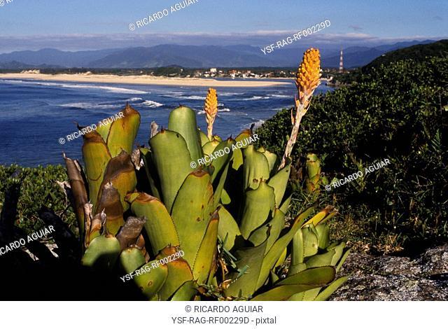 Guarda do Embaú Beach, Bromélia, Santa Catarina, Brazil