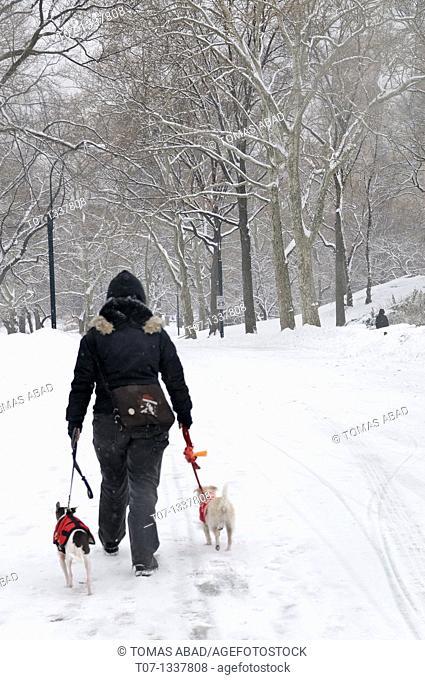 Central Park, Manhattan, Snow Storm, January 25, 2011, New York City