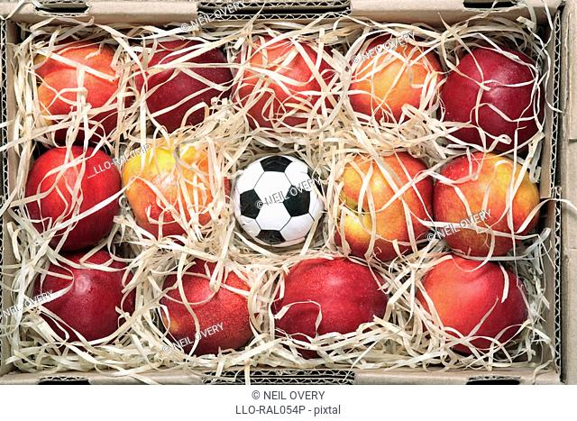 Studio shot of small football among nectarine fruits in fruit box, Grahamstown, Eastern Cape Province, South Africa