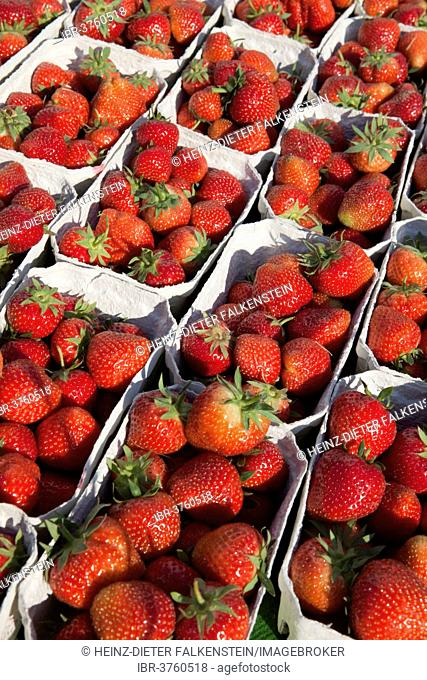 Strawberries at a market stall, Linden, Hannover, Lower Saxony, Germany