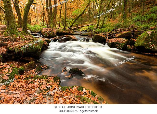 Golitha Falls on the River Fowey in Draynes Wood on Bodmin Moor, Cornwall, England