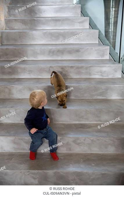 Male toddler sitting on house staircase looking over shoulder at puppy