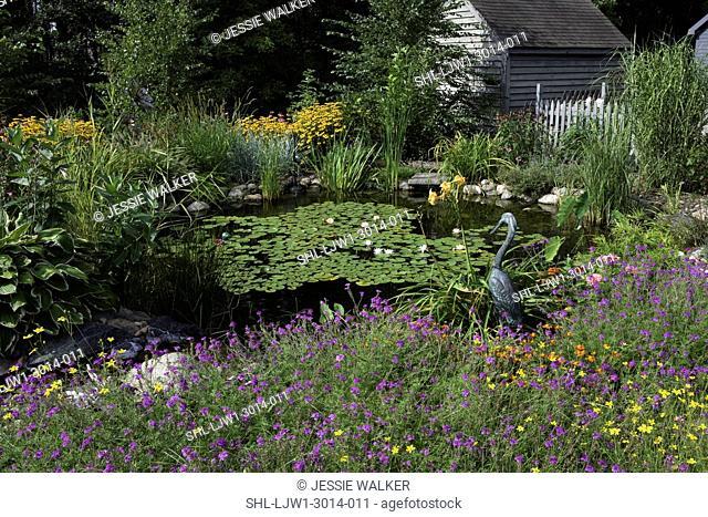 GARDENS: Pond, wild garden, bronze heron sculpture, fence and outbuilding to right, verbena in foreground, brown eyed susans