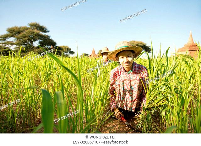 Portrait of a young Burmese woman farmer with thanaka powdered face harvesting in field