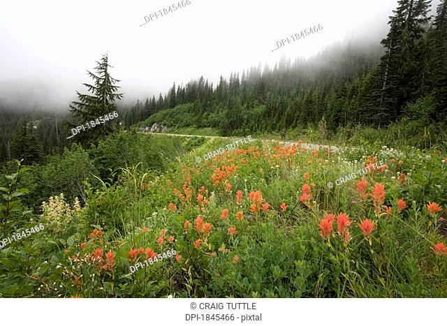 Red flowers on the side of a mountain, Mount Hood National Forest, Washington, United States of America