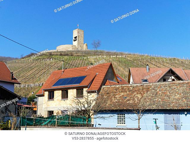 Wineck castle and vineyards, Katzenthal, Alsace, France