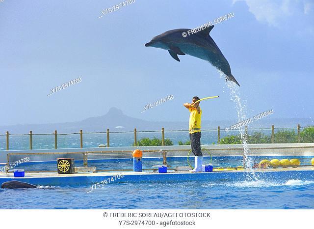 False killer whale act in the show in Okinawa Churaumi Aquarium,Okinawa Island,Japan,Asia