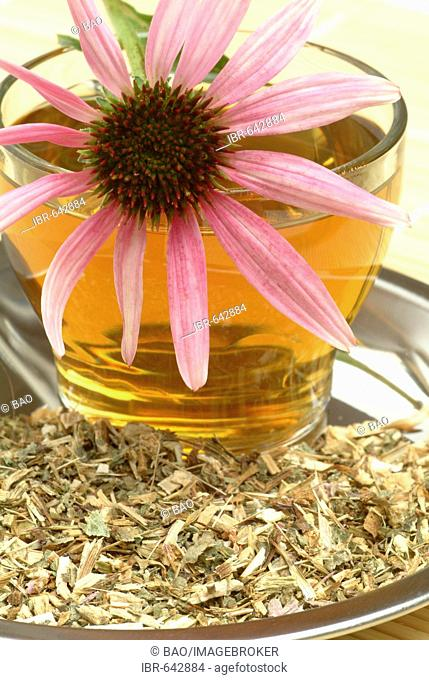 Eastern Purple Coneflower (Echinacea purpurea) herbal tea, medicinal tea