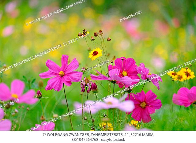 Flowers on a meadow in the German town Aalen in summer