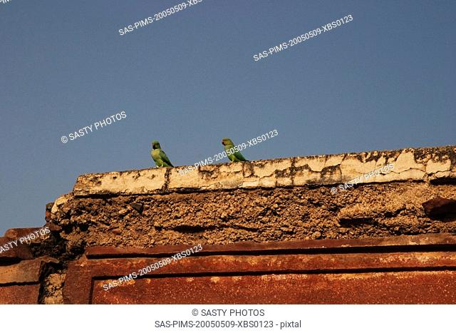 Birds perching on a wall, Fatehpur Sikri, Agra, Uttar Pradesh, India
