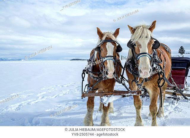 Sleigh with horses in wintertime, Bryce Canyon, Utah