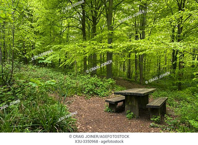 A picnic table in Leigh Woods near Bristol, North Somerset, England