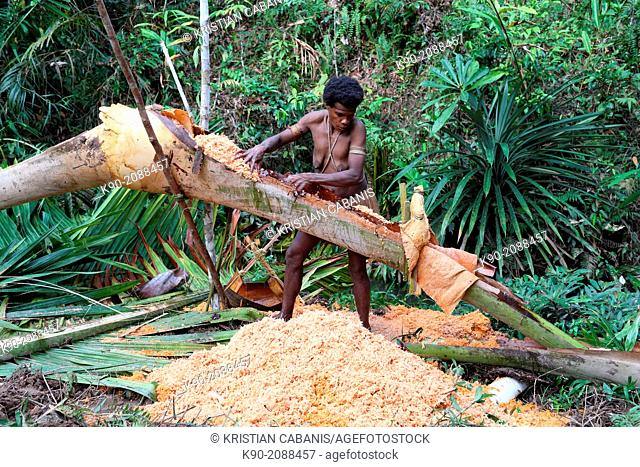 Kombai woman kneading Sago chips to extract the flour, Papua, Indonesia, Southeast Asia