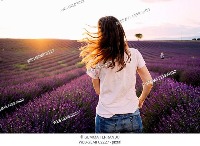 France, Valensole, back view of woman standing in front of lavender field at sunset