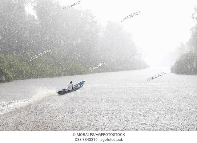 Asia, Indonesia, Borneo, Tanjung Puting National Park, Sekonyer river, Rain in tropical forest