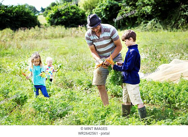A man and three children holding carrots in a vegetable patch