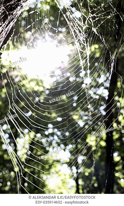 Spiders web close view haveing great lightning in the back