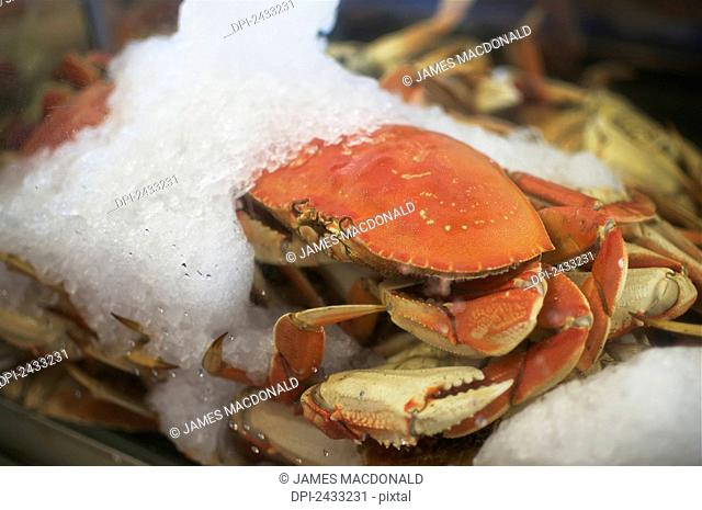 A crab sits on ice in Pier 39 on the San Francisco waterfront; San Francisco, California, United States of America