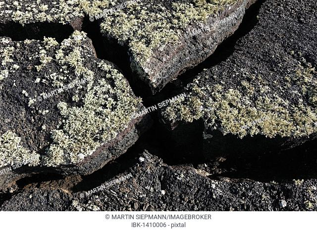 Cracks in a lava field with lichens, Lanzarote, Canary Islands, Spain, Europe