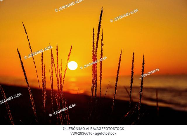 Beach at sunrise, Marbella. Malaga province. Costa del Sol, Andalusia Southern Spain. Europe
