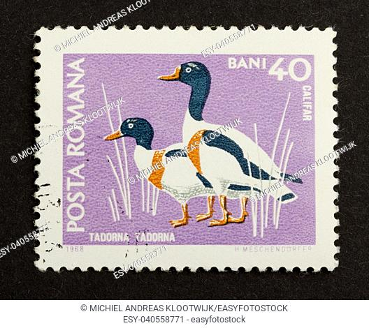 ROMANIA - CIRCA 1980: Stamp printed in Romania shows a pair of shelducks, circa 1980