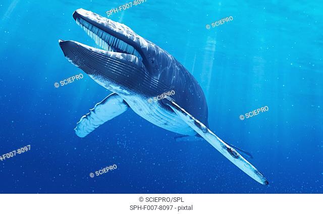 Blue whale, computer artwork