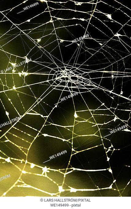 Close up of empty spider web with green background. Nature detail