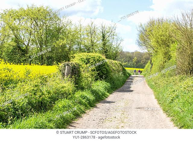 Narrow country lane in Woodthorpe village, Loughborough, Leicestershire with two walkers in the distance