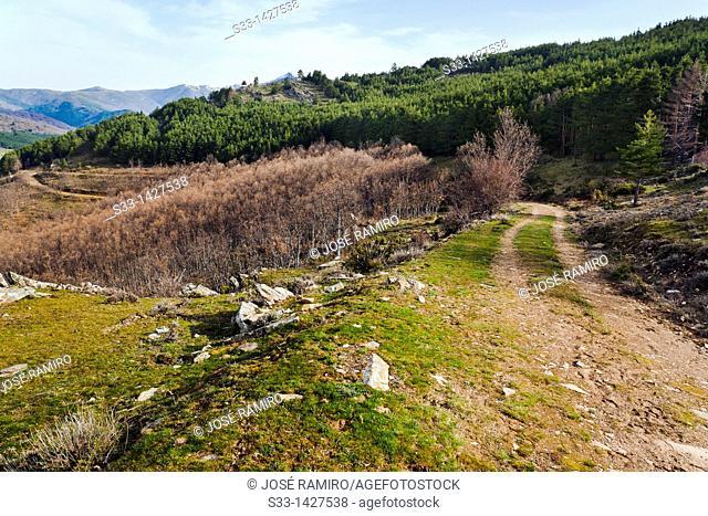 Road to the Hiruela port in the Sierra Norte  Madrid  Spain
