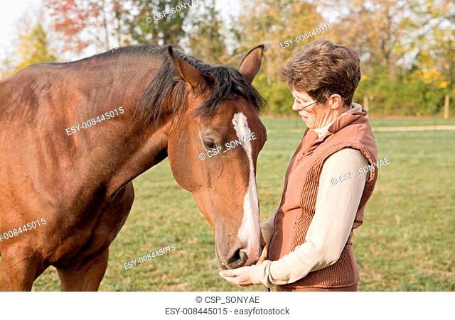 Trainer Feeding Horse