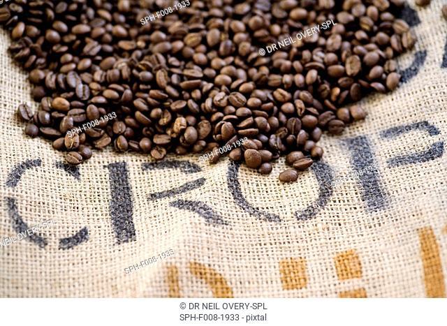 Coffee Beans (Coffea arabica)