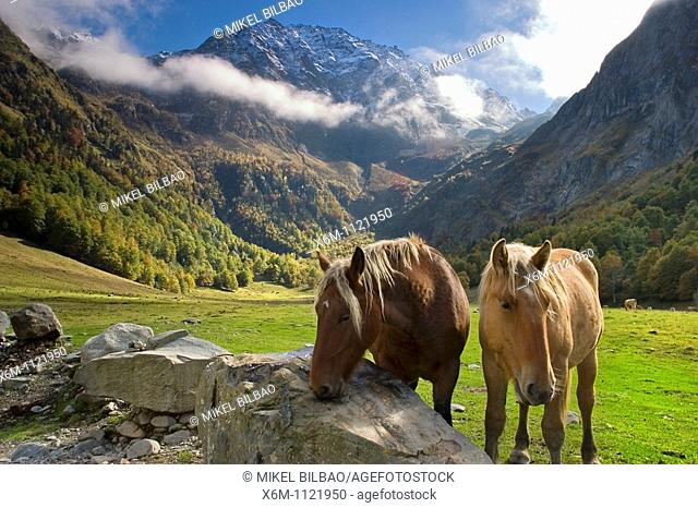 Horses in a mountain meadow  Plan dera Artiga and Tuc des Neres mountain  Artiga de Lin  Aran Valley  Pyrenees mountain range  Lerida province  Catalonia, Spain