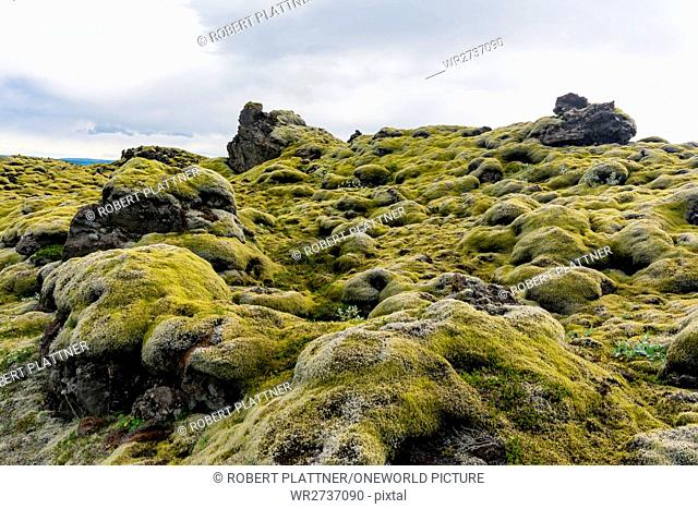 Iceland, Suðurland, marsh boulders, Svartifoss (black waterfall, according to the color of the surrounding rock) is located in the Skaftafell National Park in...