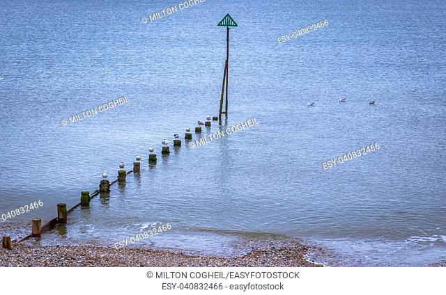 Seagulls sitting on groynes on the East Wittering shoreline, England, UK