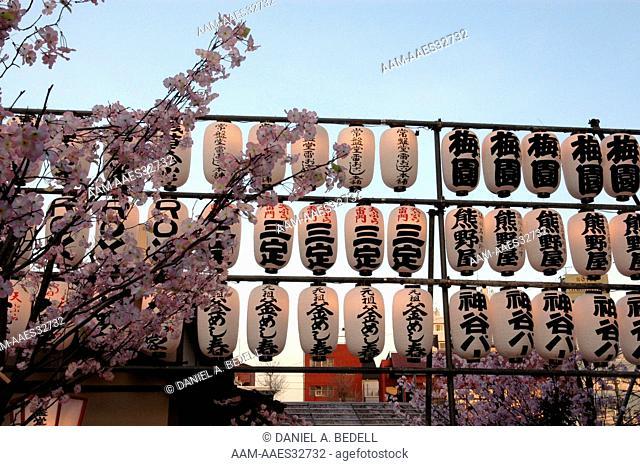 Japanese lanterns and cherry blossoms at a market in Asakusa, Japan digital capture