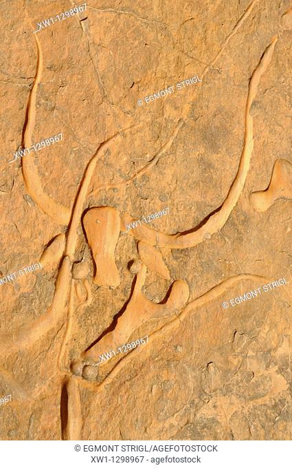 famous rock engraving of the crying cow, neolithic rockart near Djanet, Tassili n' Ajjer National Park, Unesco World Heritage Site, Wilaya Illizi, Algeria