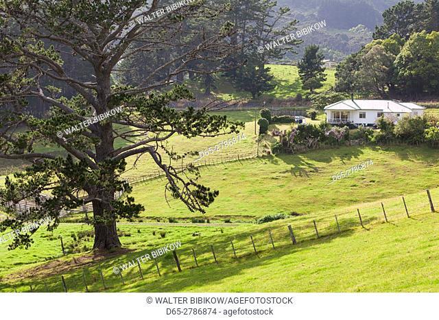 New Zealand, North Island, Coromandel Peninsula, Coromandel Town, Colville, landscape